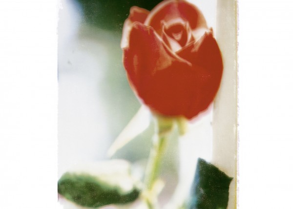 18_ROSE_ROUGE