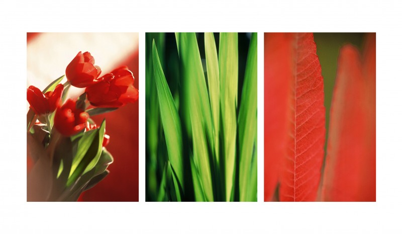 23_TULIPE_ROUGE_VEGETAL_FEUILLE_ROUGE