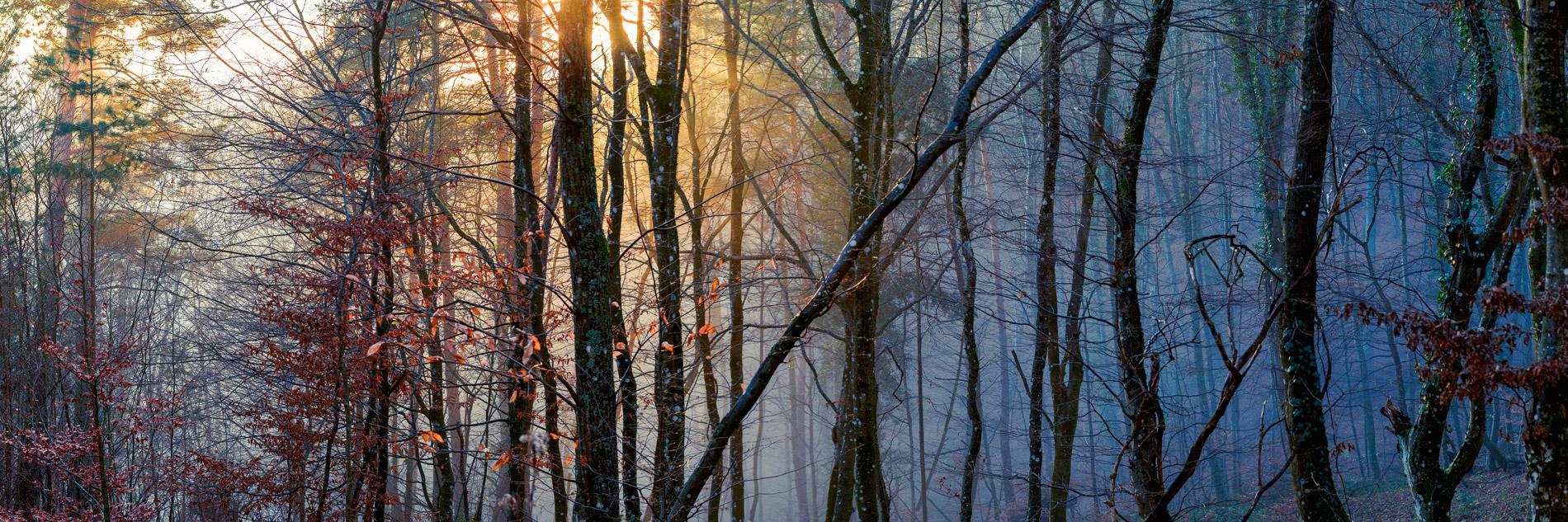 Forêt d'Andlau