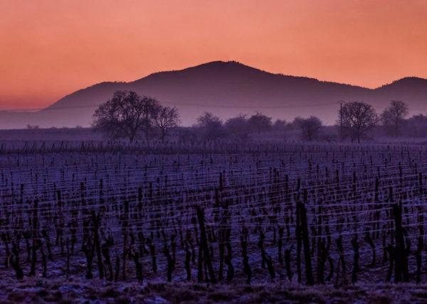 Vignoble & Pied Mont
