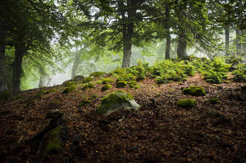 Forêt Vizzavona