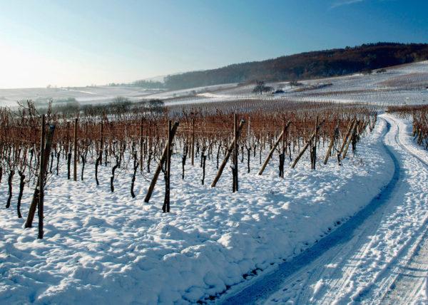 Chemin de Vignoble